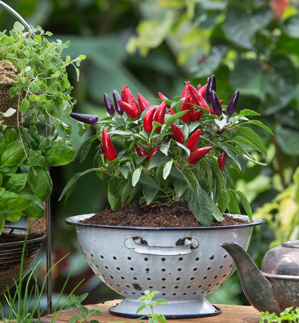 Repurposed Vegie Gardens Better Homes And Gardens