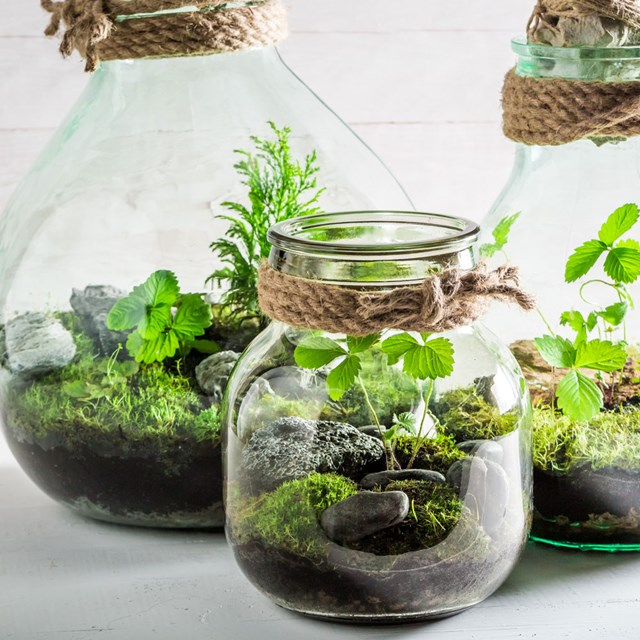 How to look after your terrarium
