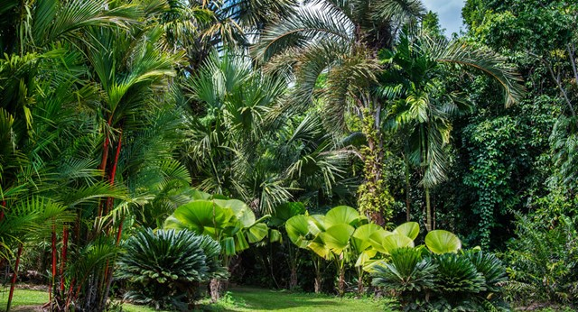 Exotic palms