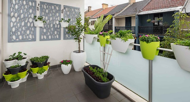 Turn your small balcony into an edible vertical garden
