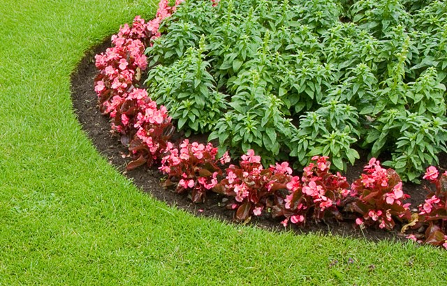 5 ways to give your garden edge!