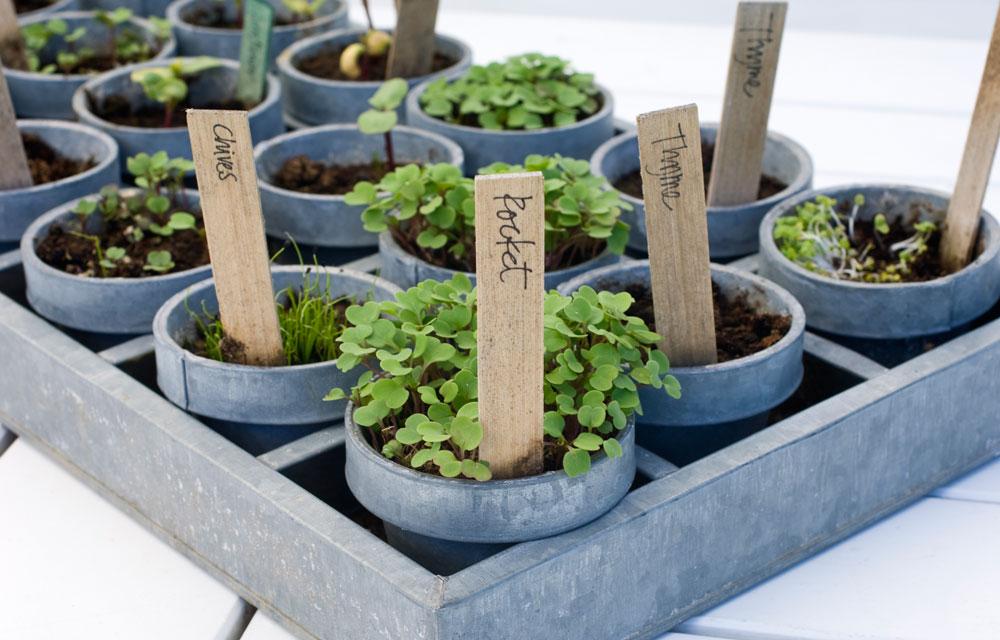 Edible Pots Diy Gardening Craft Recipes Renovating Better Homes And Gardens Australia