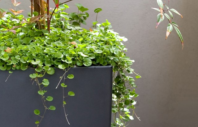 Cascading Plants Better Homes And Gardens